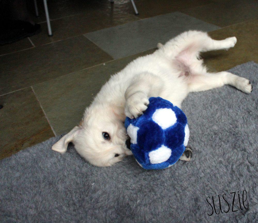 Onze nieuwe puppy Sjors!