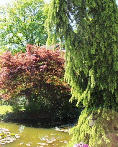 5 bijzondere tips tegen hooikoorts